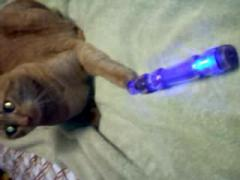 My Cat Playing with a Vibrator